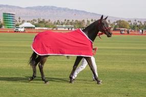 _dsc0455 horse
