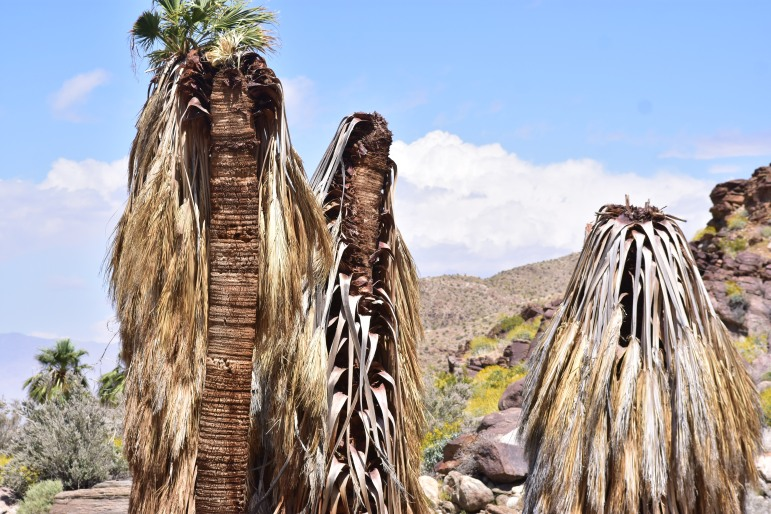 I could have stared at these palm tree ruins for hours and gotten high here.